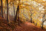 Adaptez votre forêt aux changements climatiques : une prime pour vous y aider !